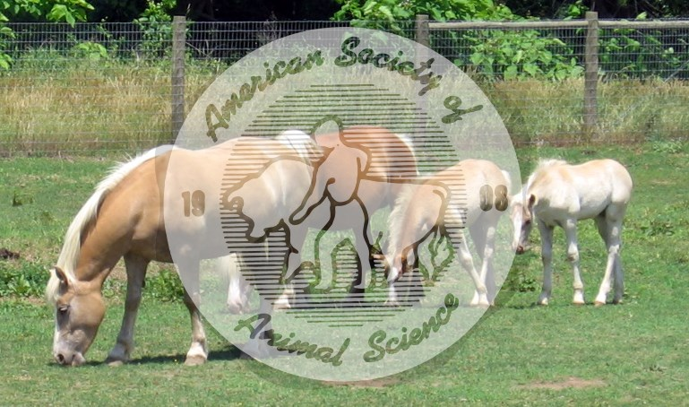 Palomino adults and foals grazing