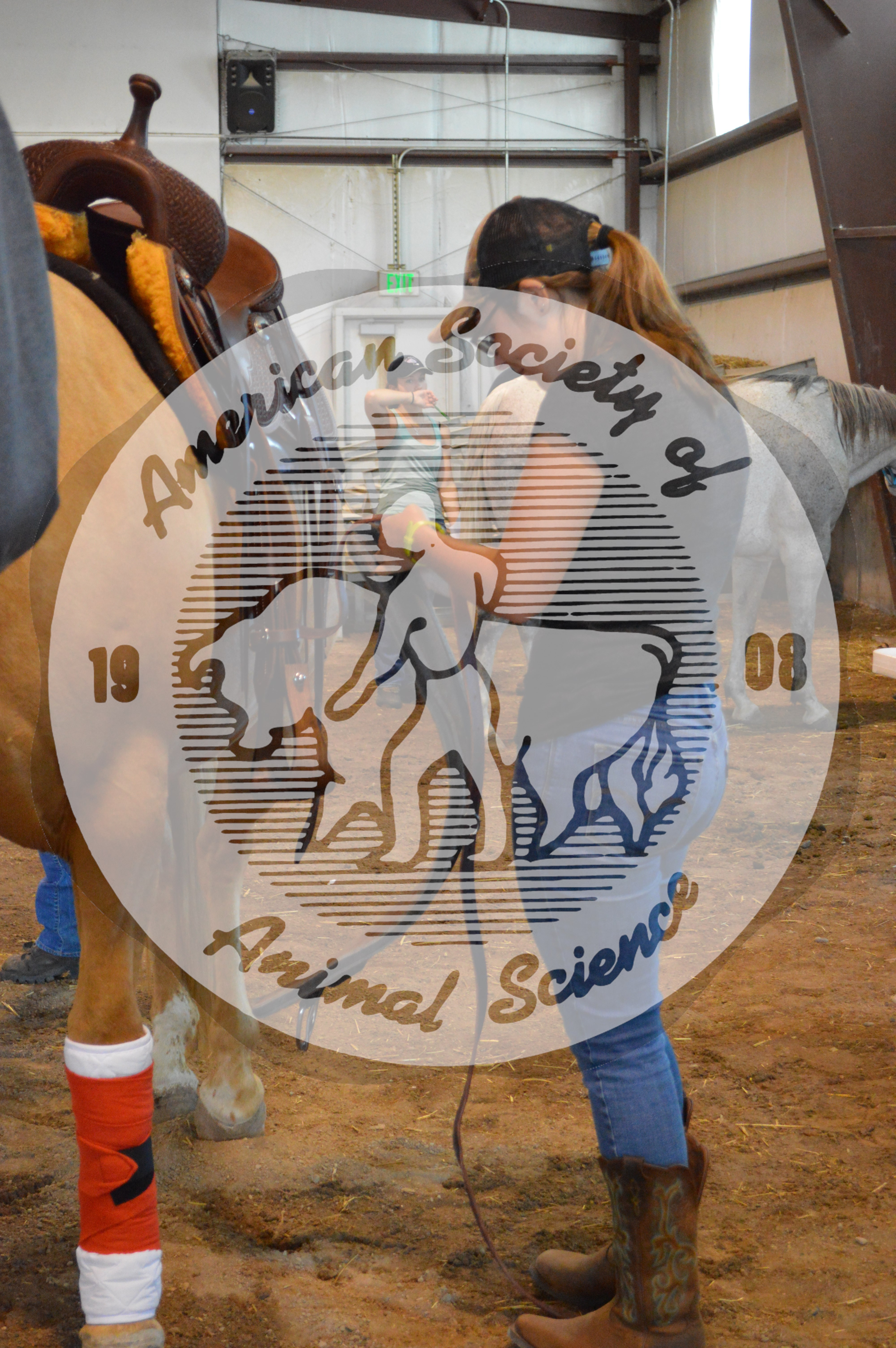 Students from the University of Rhode Island Academic Quadrathlon team demonstrate how to tack a horse.