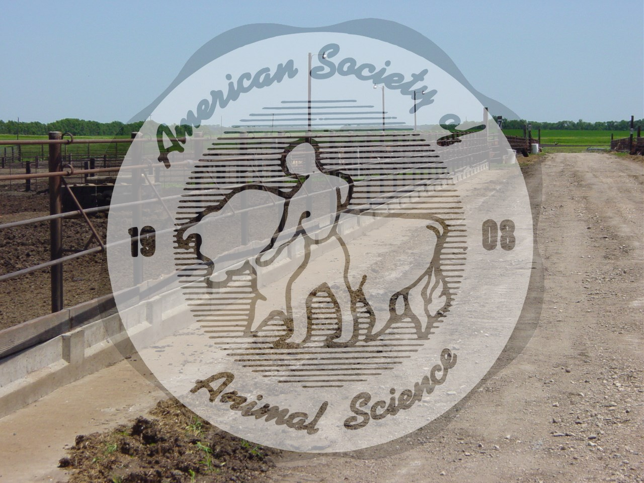 This image shows a feed pad at a feedlot in southeastern North Dakota.  The pad is constructed in a manner to allow feed to be placed directly on the pad rather than in a feed bunk.  Oilfield pipe and sucker rod is used to construct the fencing.