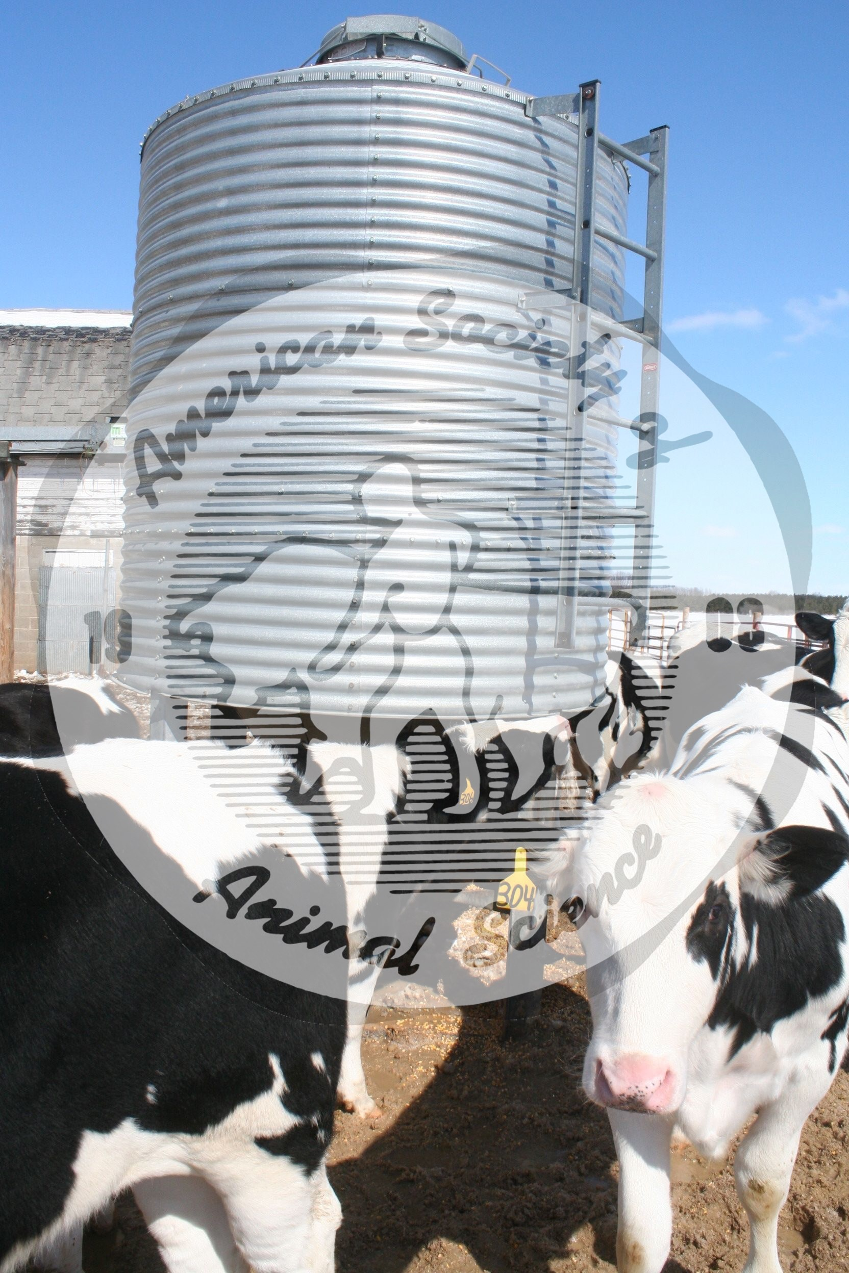 This is one type of self-feeder where grain and supplement mix are placed in the feeder.  The advantage of a self-feeder is to reduce the cost of labor and equipment in comparison to a total mixed ration in a bunk.  Free-choice forage can be provided in addition to the self-feeder.