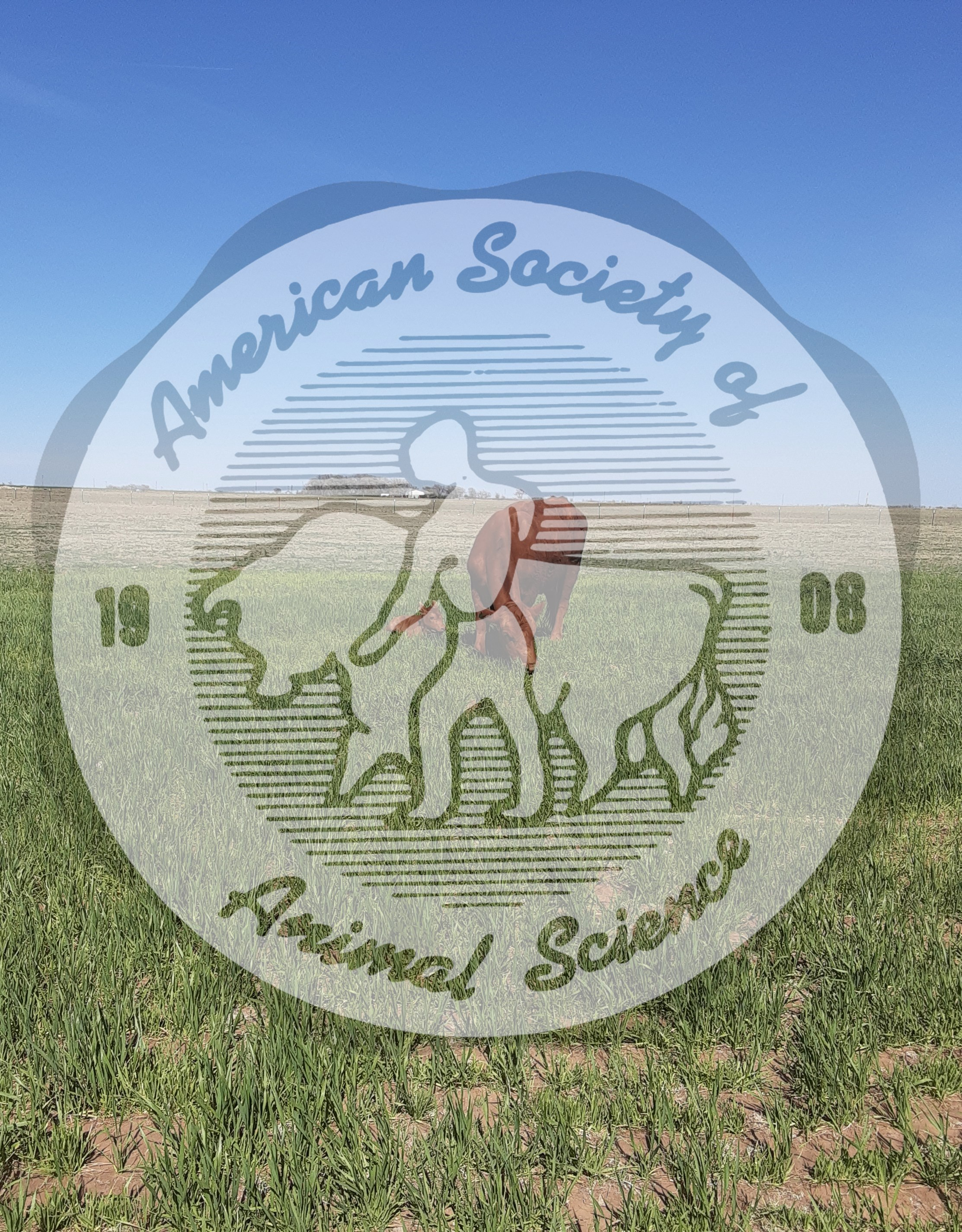 Picture taken of a newborn Balancer calf with a purebred Gelbvieh. Gelbvieh cattle originated in southern Germany.  The cattle are known for their maternal traits, increased rate of gain and  improved feed efficiency.  In addition, Gelbvieh cattle are medium to large framed and docile.  Balancer cattle are a recognized hybrid seedstock that are registered with the American Gelbvieh Association.  Balancer cattle are 25 to 75% Gelbvieh with the balance Angus or Red Angus.  The cow is a registered Gelbvieh and the calf is 50:50 Gelbvieh:Red Angus.