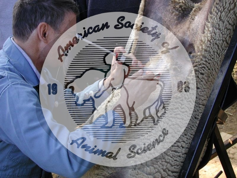 Laparoscopic artificial insemination (AI) is a method of artificially breeding ewes. In this minor surgical procedure, the semen is deposited directly into the uterine horns. It is the most common method of AI in sheep.