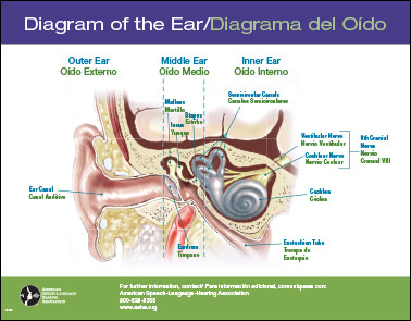 Bilingual laminated diagram of the earhearing aids ccuart Image collections