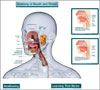 Anatomy of Mouth and Throat Chart