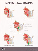 Normal Swallowing Poster
