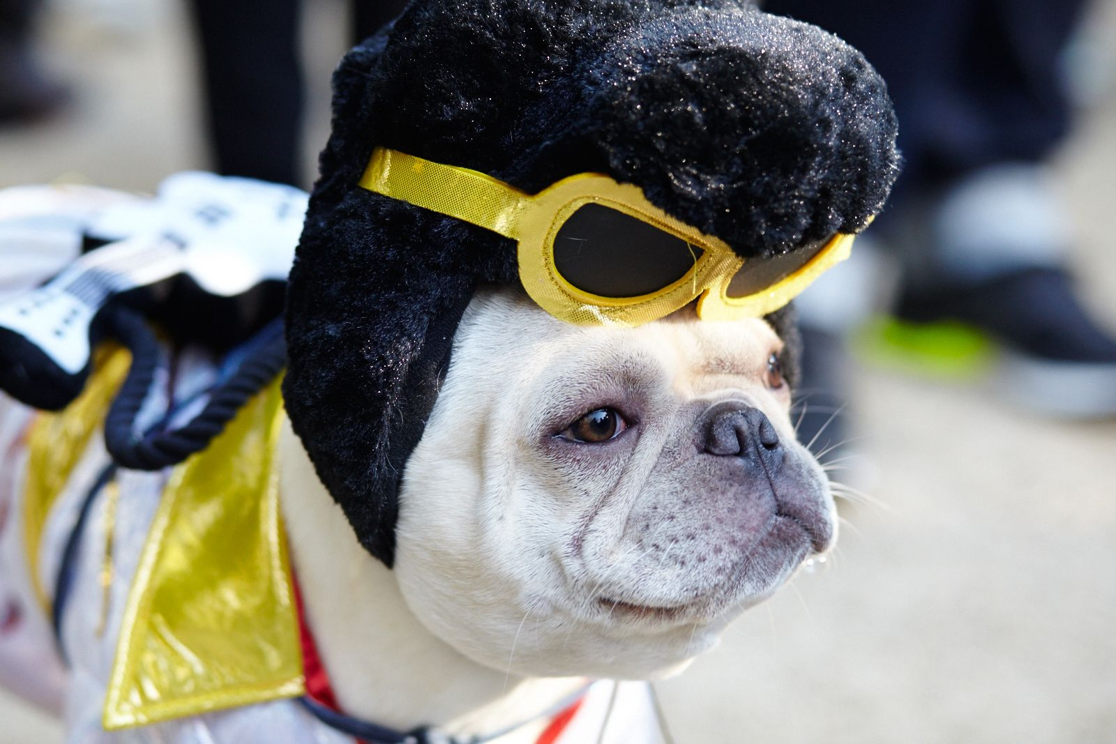Coolest Dog Costumes , For January 2020