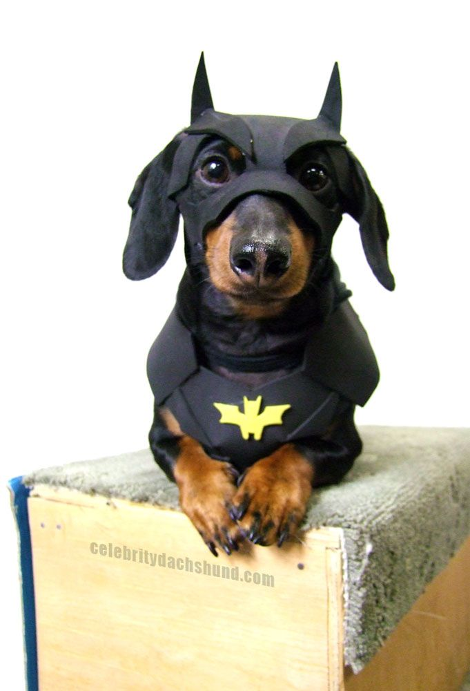 Coolest dog costumes in 2018 dog size solutioingenieria Choice Image