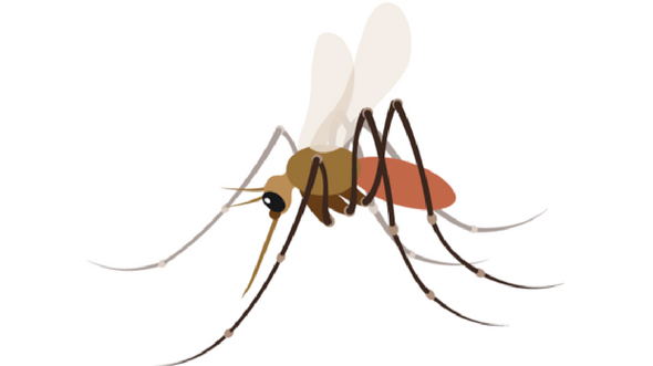 ASPPH   Johns Hopkins: Mosquito Emoji Approved by Unicode
