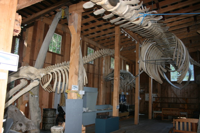 The Telegraph Cove whale museum