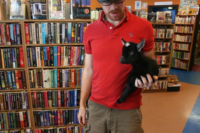 A bookshop goat