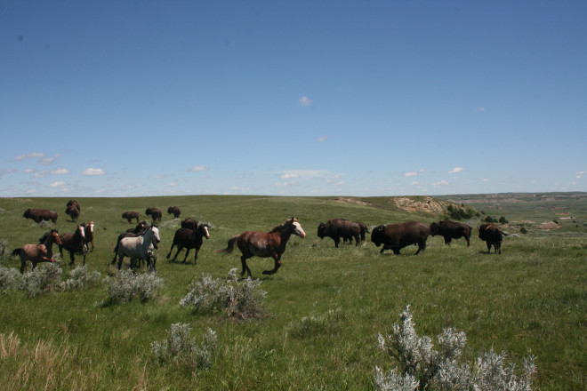 The Theodore Roosevelt National Park