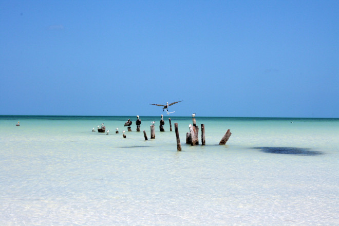 That's my stump - Holbox Island, Quintana Roo