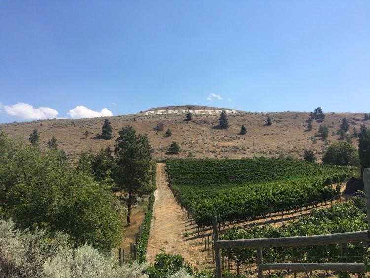 Walking through the Penticton vinyards