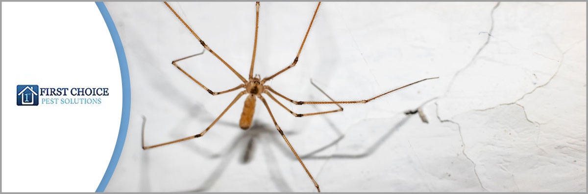 First Choice Pest Solutions LLC is a Pest Control Company in Covington, LA