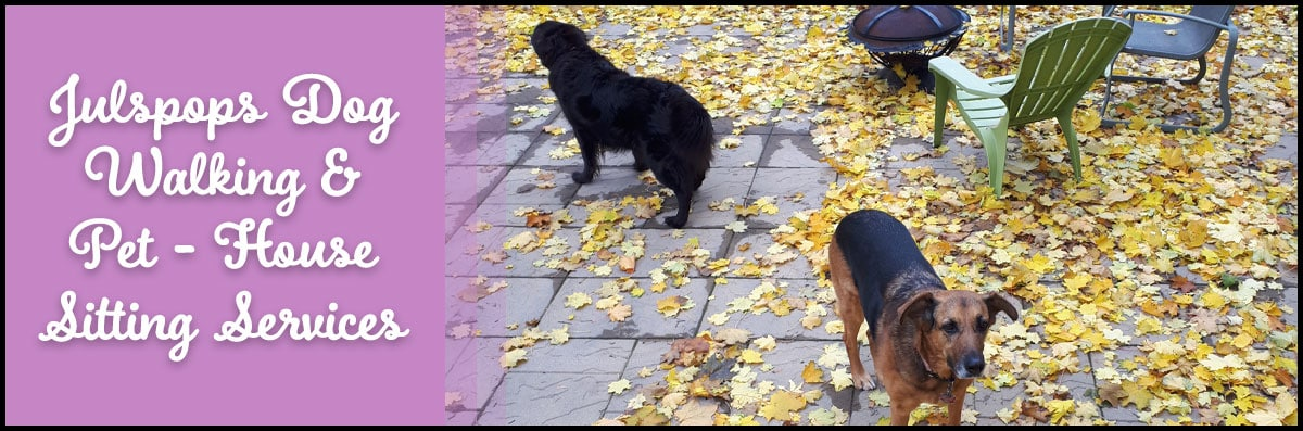 Julspops Dog Walking & Pet - House Sitting Services is a Pet Service in London, ON