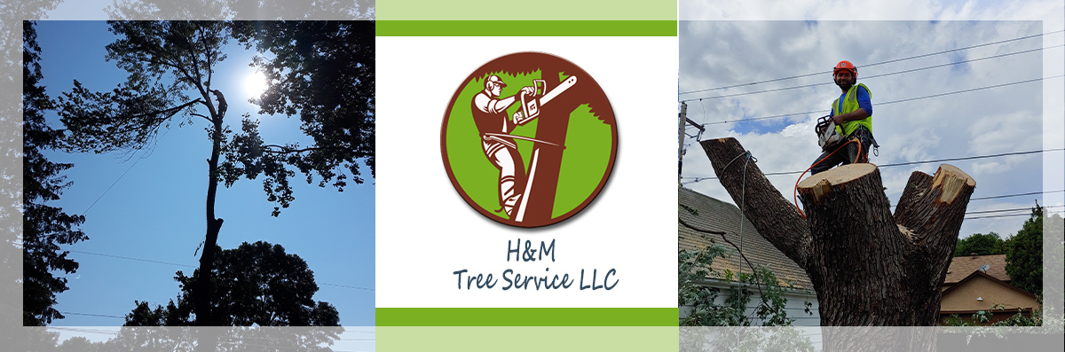 H&M Tree Service LLC is a Tree Contractor in Chanhassen, MN