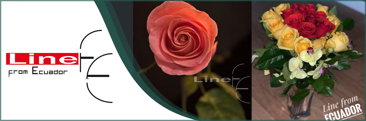 Line From Ecuador Flowers is a Flower Shop in Santa Rosa, CA