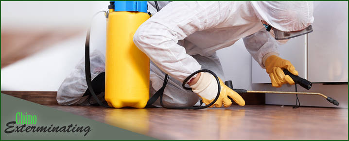 Chino Exterminating does pest control in Chino Valley, AZ