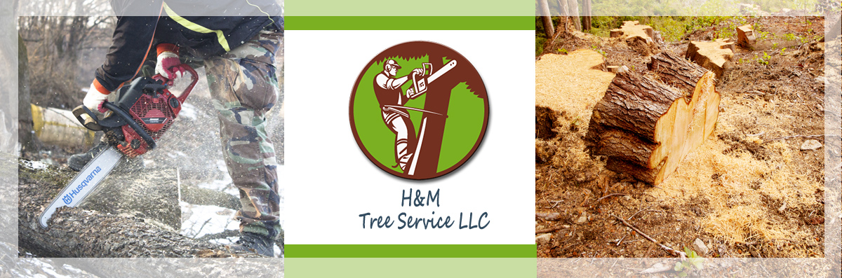 H&M Tree Service LLC provides Tree & Stump Removal in Chanhassen, MN