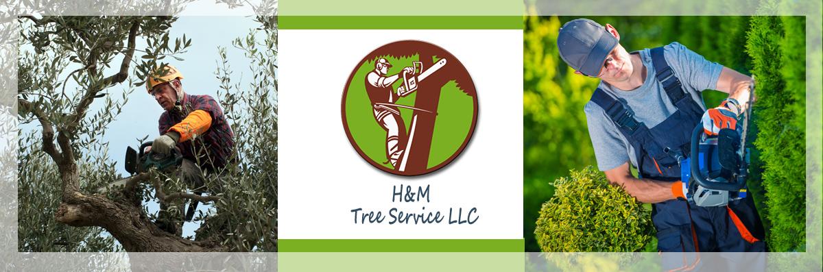 H&M Tree Service LLC provides Tree & Bush Trimming in Chanhassen, MN