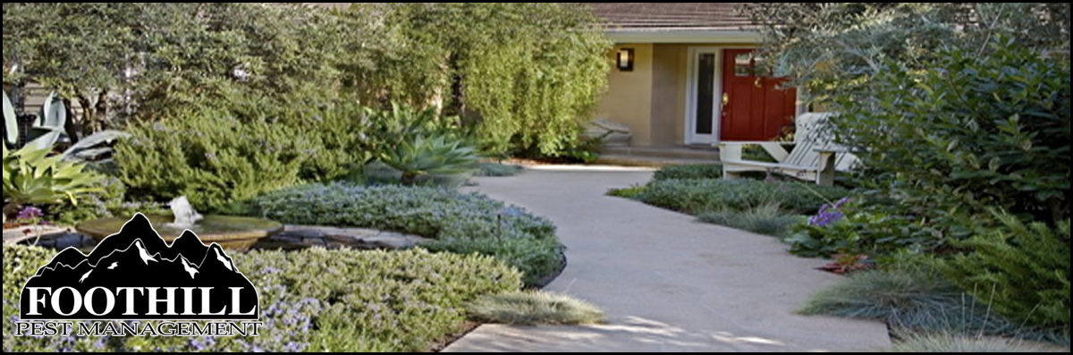 Foothill Pest Management  Offers Residential Pest Services in Carpinteria, CA