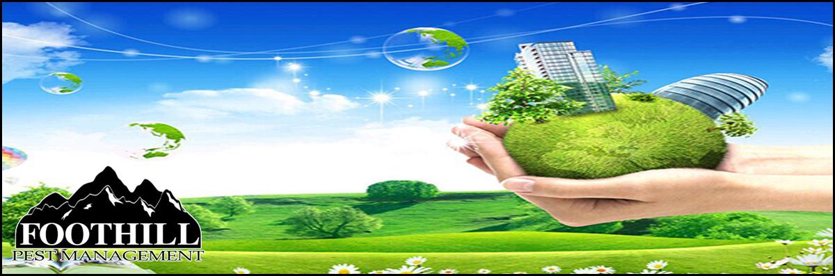 Eco-Friendly Services