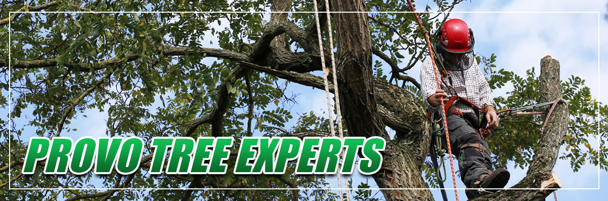 Provo Tree Experts provides Tree Trimming in Spanish Fork, UT