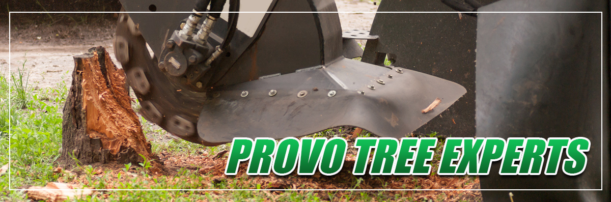Provo Tree Experts provides Tree & Stump Removal in Spanish Fork, UT
