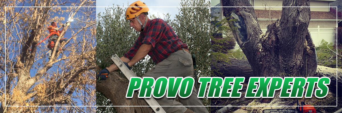 Provo Tree Experts provides Tree Diagnostics in Spanish Fork, UT