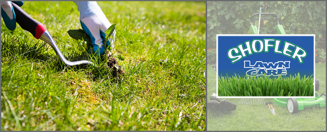 Shofler Lawn Care Provides Weed Control in Center Town, MO