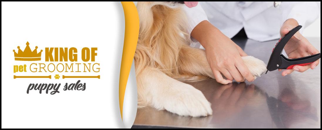 Pet Toenail Clipping