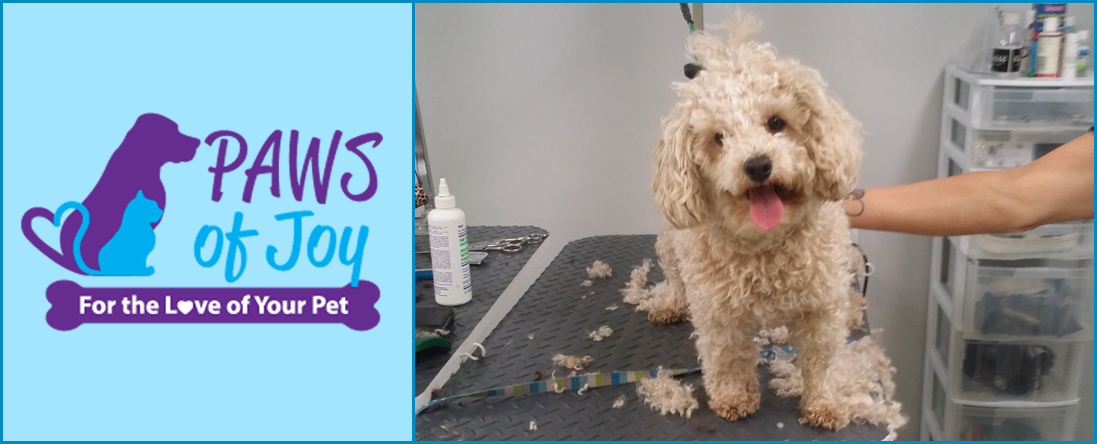 Paws of Joy Offers Full-Service Grooming in Toronto, ON