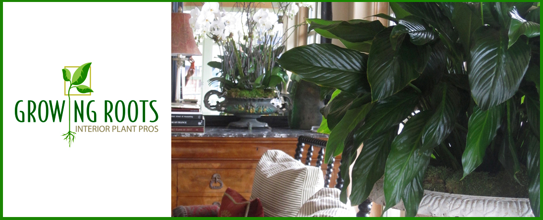 Residential Plant Care