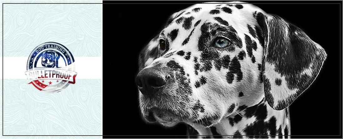 Bulletproof Dog Training Offers Behavioral Training in Cincinnati, OH