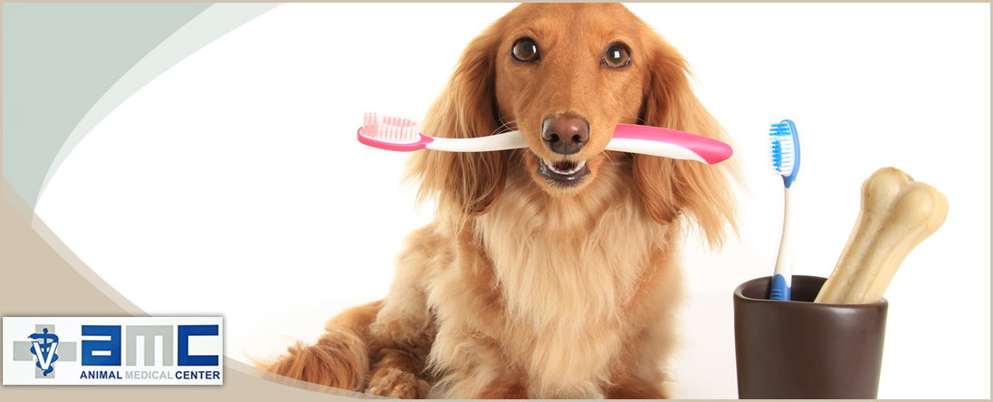 Animal Dental Care