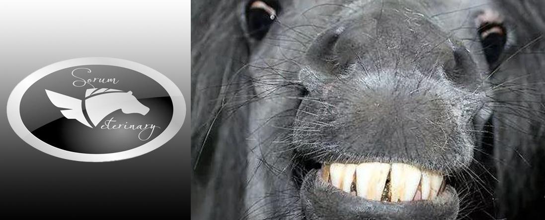 Horse Dentistry
