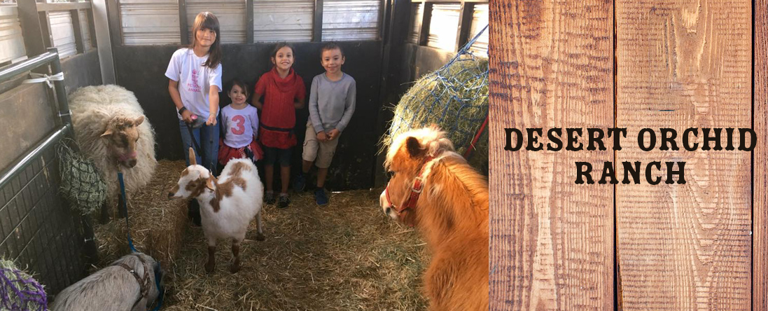 Desert Orchid Ranch Petting Zoo is a Petting Zoo in