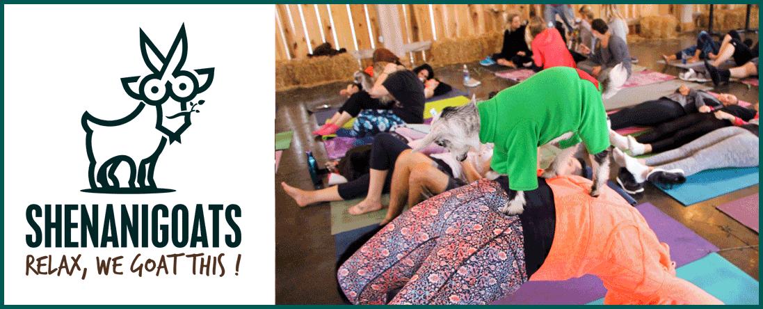 Shenanigoats Yoga is a Yoga Goat Studio in Nashville, TN