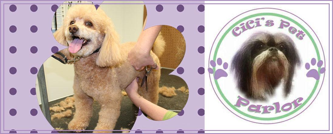 Dog Haircuts