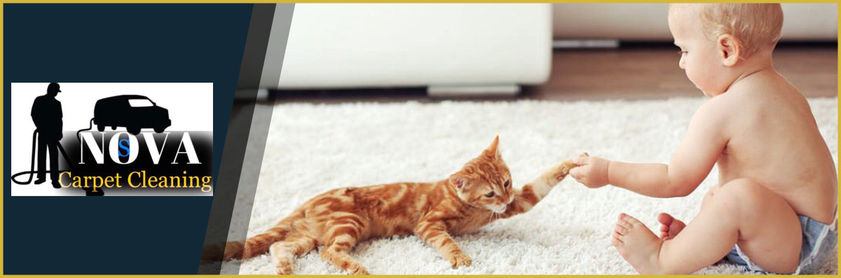 NOVA STEAMERS  Offers Rug Cleaning in Gainesville, VA