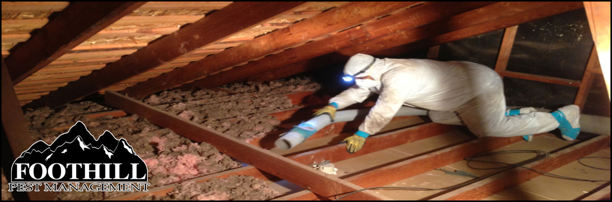 Foothill Pest Management  Offers Attic and Subfloor Clean-Outs  in Carpinteria, CA