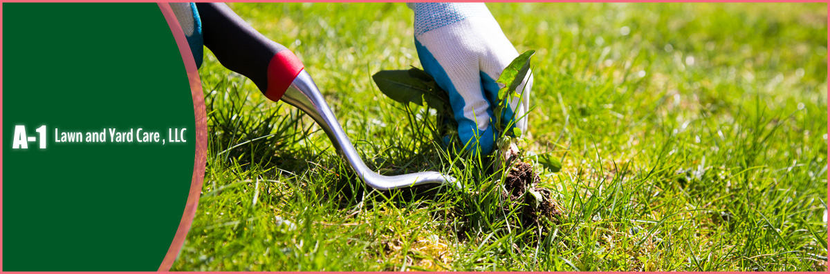 A-1 Lawn And Yard Care Offers Lawn Maintenance in Hawthorne, FL