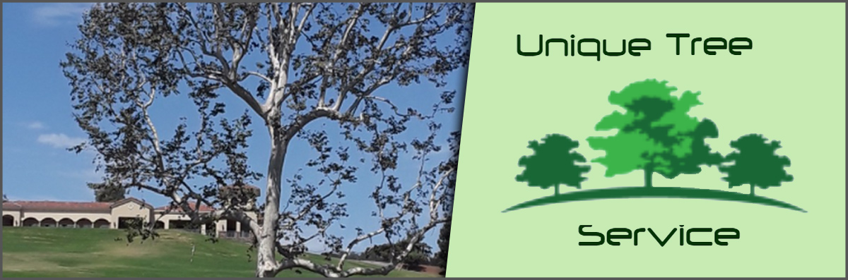 Unique Tree Service Offers Tree Pruning in Anaheim, CA