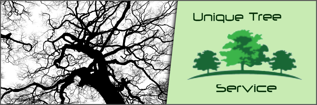 Unique Tree Service Offers Tree Services in Anaheim, CA
