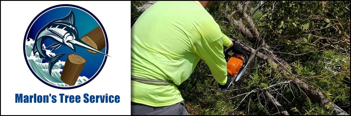 Marlon's Tree Service Does Tree Trimming in Pembroke Pines, FL