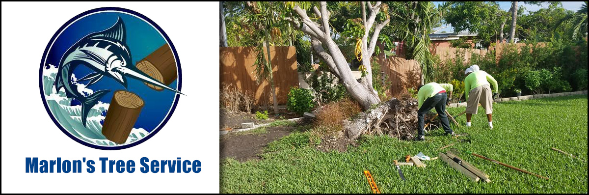 Marlon's Tree Service Does Tree Removal in Pembroke Pines, FL