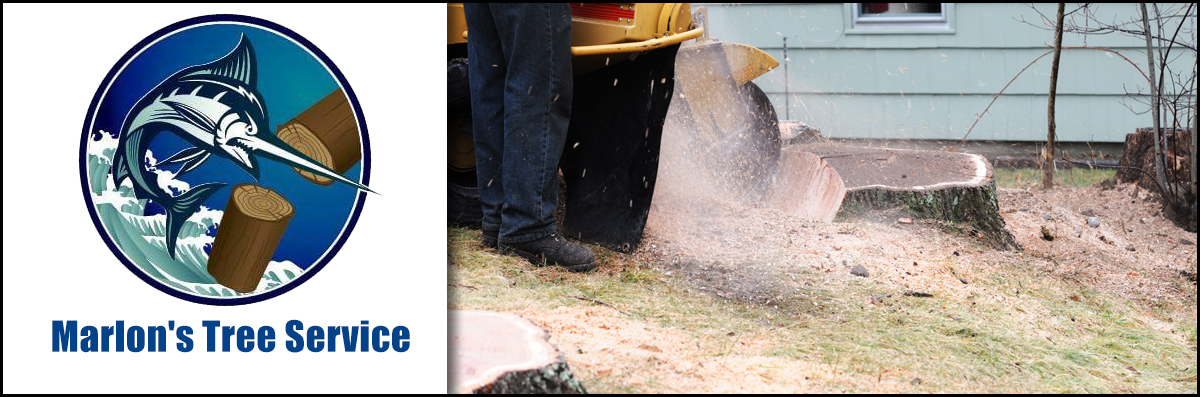 Marlon's Tree Service Does Stump Grinding in Pembroke Pines, FL