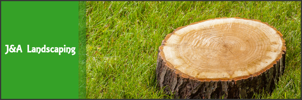 J&A Landscaping Offers Tree Removal in Conroe, TX