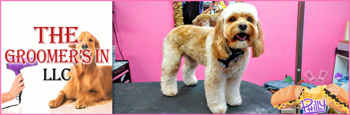 The Groomer's In LLC Provides Pet Grooming Services in Maple Shade Township, NJ