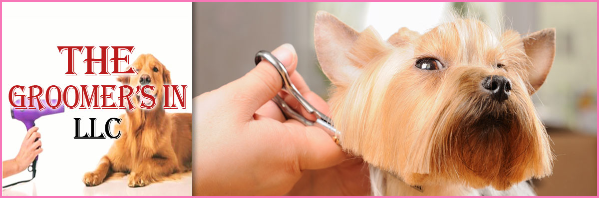 The Groomer's In LLC Provides Asian Fusion Grooming in Maple Shade Township, NJ